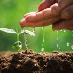 153-1531794_photo-wallpaper-water-life-sprouts-hands-hombre-y